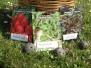 Guerrilla Gardening con le Bombe di Semi